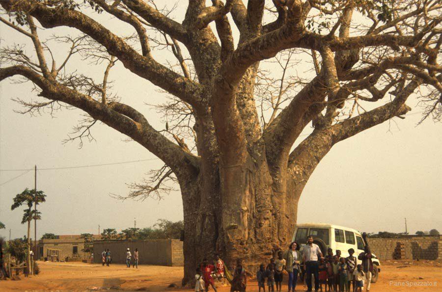 africa-bella-baobab-angola.jpg