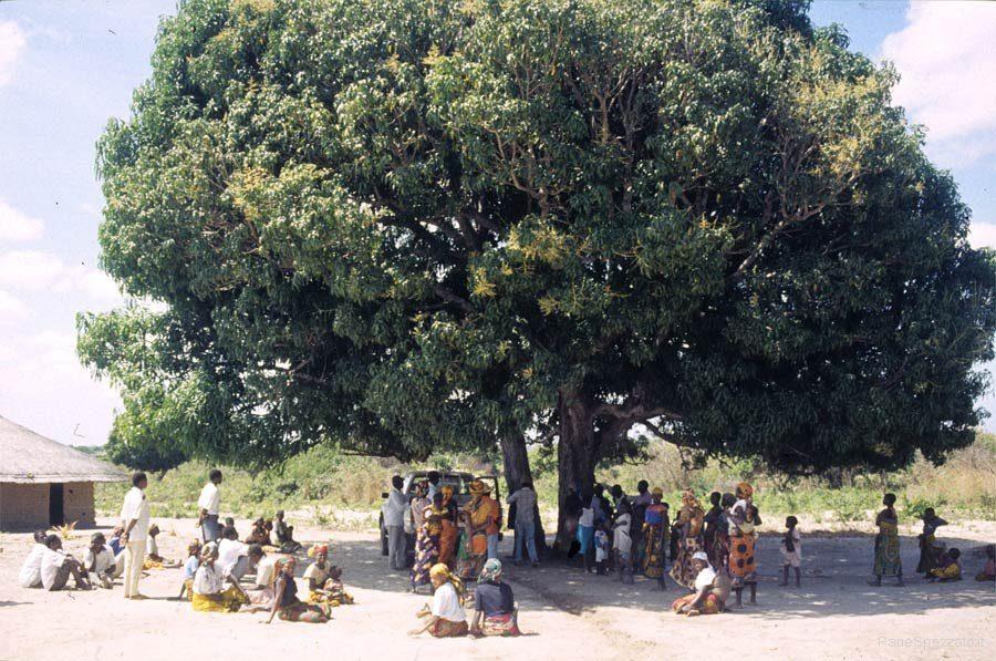 africa-bella-mozambico.jpg